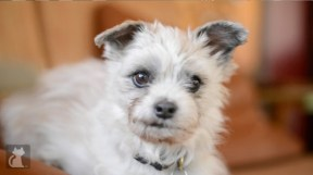 Emerson shelter dog rescued