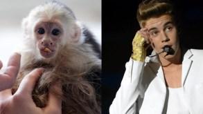 Justin Bieber pet monkey