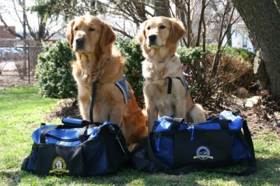 K-9 Parish Comfort Dogs Luther and Ruthie with their bags packed and ready for their trip to Boston. Photo Credit: Lutheran Church Charities