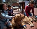 comfort service dogs visit boston residents