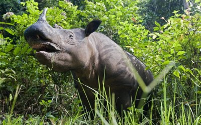 The last 15 rhinos in Mozambique were murdered for their ivory this past month. Photo Credit: Getty Images