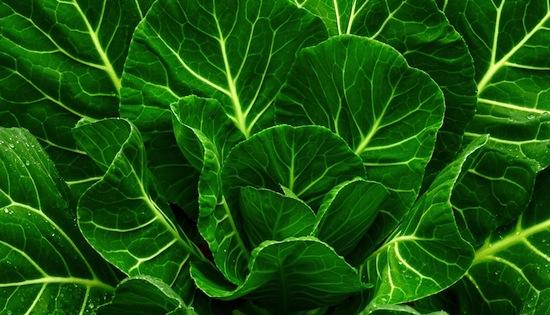 Collard greens does a body good. Photo Credit: Shutterstock