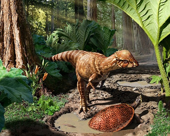Above is a reconstruction of Acrotholus audeti, a dome-headed dinosaur that lived 85 million years ago. Photo Credit: Julius Csotonyi