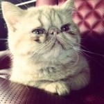 Bieber Cat