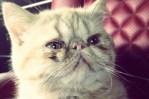 Bieber's New Cat