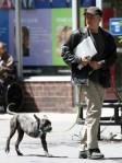 Jon Stewart Walking Dog in NYC