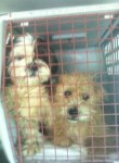 two dogs rescued from oklahoma shelters