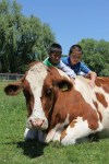 two boys visit cow at catskill animal sanctuary
