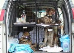 PAWS Chicago transfer oklahoma rescue dogs