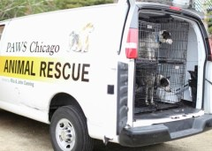 Oklahoma dogs arriving at PAWS Chicago's Adoption Center. Photo Credit: PAWS Chicago, Facebook