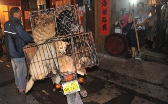 Yulin, China's dog meat festival plans to proceed amidst heavy opposition. Photo Credit: Ian Somerhalder Foundation