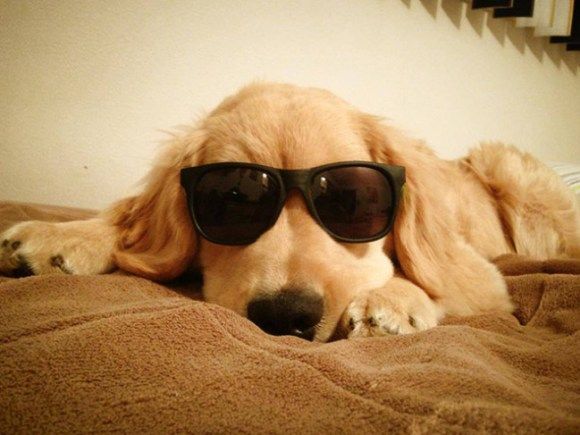 The blind puppy Ray Charles wants to drop the puck at the Boston Bruins game. Photo Credit: USA Today