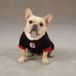 Miami Heat French Bull Dog