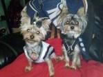 Spurs Pups