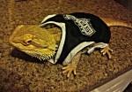 Spur Reptile