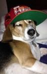 Heat Dog