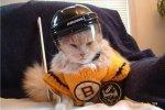 boston bruins cat