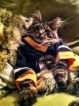 bruins hockey cat in jersey
