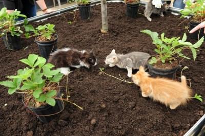 Kitty garden. Photo credit: Environics