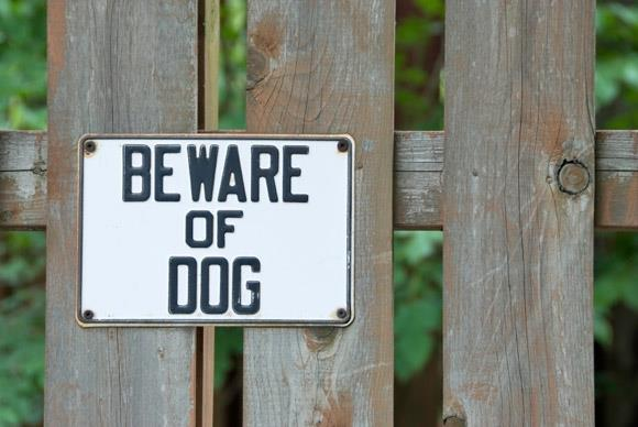 The UK has a number of laws in place to consider carefully when parenting a dog. Photo Credit: Facebook