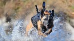 Cairo Seal Team Six Dog