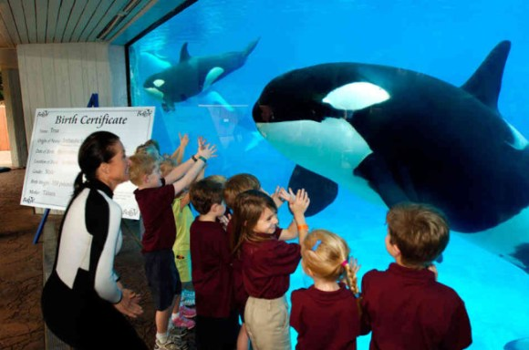 PETA is calling for orca whales to be placed in large-scale ocean sanctuaries. Photo Credit: Chris Gotshall/AP Photo