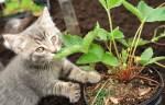 kitten sniffs potted garden plant