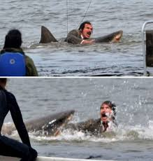 """PETA urging producers of Will Ferell's upcoming comedy """"Anchorman 2: The Legend Continues"""" to remove all scenes with dolphins at Sea World."""
