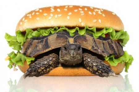 Pet Turtle Disguised as a Hamburger Photo Credit: Shutterstock