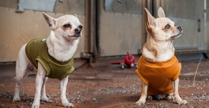 These chihuahuas sport handmade Ace Tales t-shirts, one possible reward for donating. Photo Credit: Bugbyte