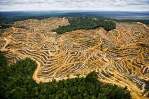 The destruction of rainforests has had terrible implications for the wellbeing of the natural world as well as ourselves. Photo Credit: world.edu