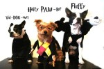 harry potter dogs in halloween costumes