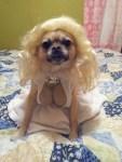 marilyn monroe dog halloween costume