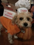 dog in donuts halloween costume