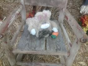Tortoise & The Hare!