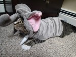 Kitty cat Millie is dressed as an elephant.