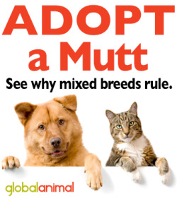 Adopt-a-Mutt-mixed-breed-dogs-adoption