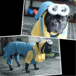 bulldog dog dressed as Despicable Me minion
