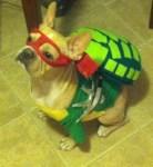 French Bulldog dog Ninja Turtle Halloween Costume
