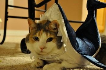 Attack of the kittyshark!