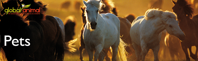 Wild horses in Global Animal articles about cats, dogs, horses, and pets.