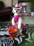 pink cowgirl dog halloween costume