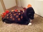 dino kitty cat dinosaur halloween costume