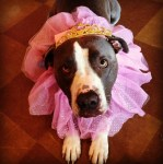 PET HALLOWEEN COSTUME, DOGS AND PUPPIES IN COSTUME, PRINCESS COSTUME.