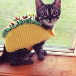 PET HALLOWEEN COSTUME, CATS AND KITTENS IN COSTUMES, TACO COSTUME