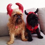 PET HALLOWEEN COSTUME, DOGS AND PUPPIES IN COSTUME, DEVIL