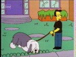 Lovejoy's Sheepdog