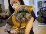 Dog as Star Wars Ewok halloween costume