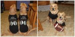 golden retrievers dogs wearing football pet halloween costumes