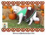 Winnie dog at Barktoberfest 2013, halloween costume